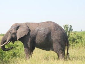 3 Days Medley of Wonders Safari in Queen Elizabeth National Park, Uganda