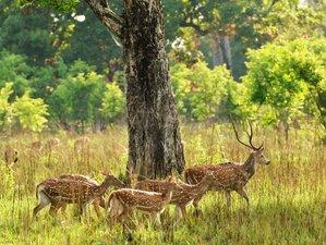 5 Day Wildlife Safari in Bardia National Park, Bardiya