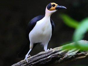 15 Days Mega Birdwatching and Photography Safari in Ghana