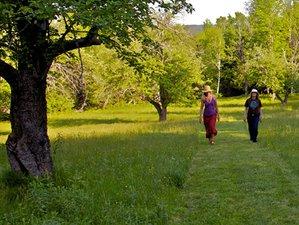 4 Days Silent Yoga & Meditation Retreat in USA