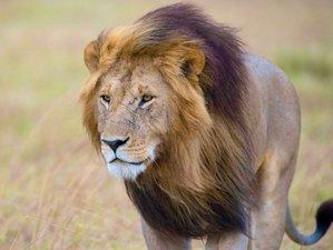 5 Days Classic Safari in Maasai Mara and Lake Nakuru National Park, Kenya