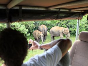 4 Day Camping Safari in Yala National Park, Southern Province