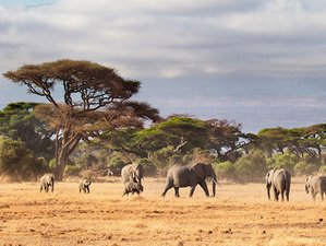 6 Day Big Five Safari Tour, Cultural Experience and Walking Tour in Tanzania