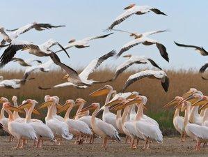 2 Days Wildlife Tour in Danube Delta, Romania