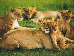 3 Days Private Safari in Amboseli National Park, Kenya