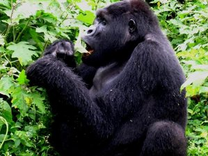 4 Days Trekking and Gorilla Safari in Kampala, Uganda