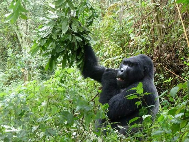 9 Days Gorilla Tracking and African Safari in Uganda