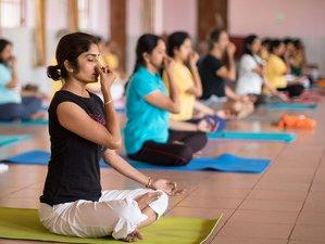 30 Days 200-Hour Sivananda Yoga Teacher Training in India