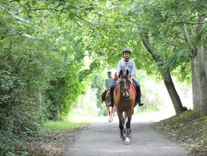 29 Days Teen English Lessons and Horse Riding Camp (11 to 17 Years) in Dublin, Ireland