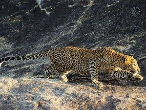 9 Day Heritage, Beach and Wildlife Safari in Sri Lanka