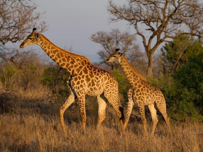 8 Days Photography South Africa Safari
