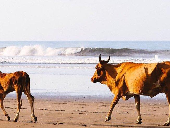 7 Days Yoga and Surf Camp Nicaragua