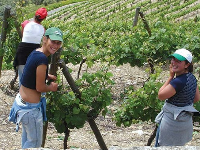 8 Days Wine Holiday in Portugal