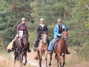 8 Days Adult Horse Riding Holiday in Hitzacker, Germany