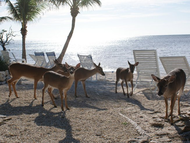 4-Daagse Sjamanistische Yoga Retraite in Florida Keys