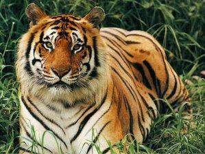 4 Days Wilderness Safari in Mudhumalai Forests, India
