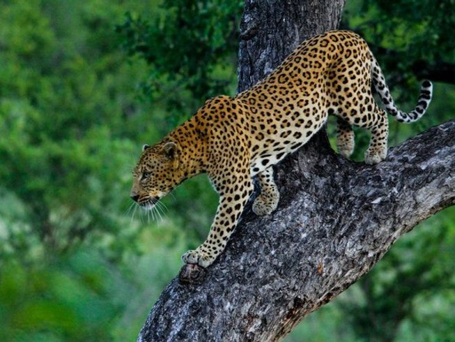 3 Days Fly in Kruger Safari in South Africa