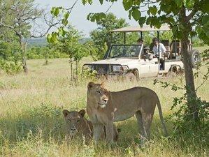 11 Day Luxury Flying Sanctuary Retreats Wildlife Safari in Tanzania