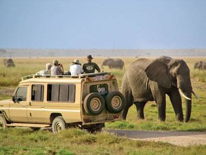6 Days Amboseli, Masai Mara & Nakuru Budget Safari Tour