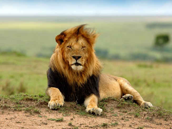 4 Days Private Safari in Tanzania