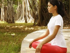 7 Days Healing and Wellness Yoga Retreat in India