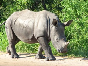 8 Days Kruger Park Safari South Africa