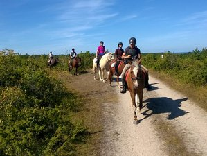3 Days Beginner Horse Riding Holiday in Muhu, Estonia