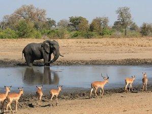 2 Days Wildlife Safari in Kruger National Park, South Africa
