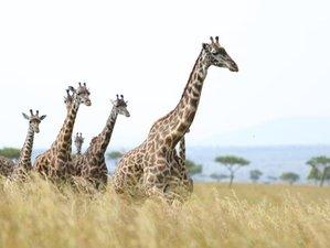 4 Days Masaai Mara and Lake Nakuru Private Safari in Kenya