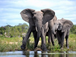 4 Days Incredible Kruger National Park Safari in South Africa