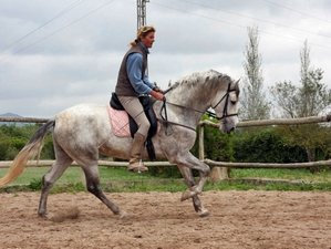 8 Day Beginners Horse Riding Program in Mallorca, Balearic Islands