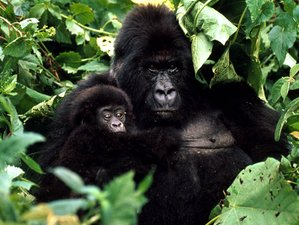 3 Days Remarkable Gorilla Safari in Uganda