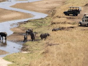 7 Days Flamingos and Big Five Tanzania Safari