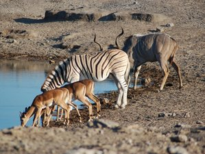 7 Days Safari in Sossusvlei Area and Etosha National Park, Namibia