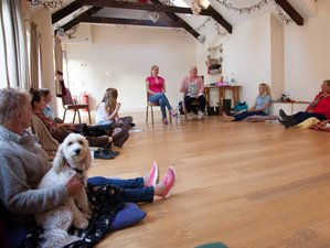 5 Days Meditations Retreat with Your Dog in Newcastle Emlyn, Wales