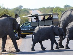5 Days Budget Safari in Kruger National Park, South Africa