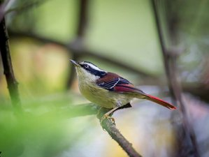 14 Days Eagle Nest Birdwatching Safari Tour in India