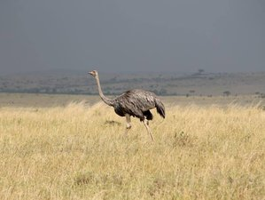 13 Days Magical Safari in Kenya and Tanzania
