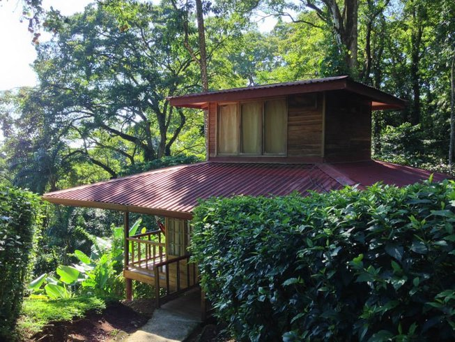 8 Days Adventure, Service, Yoga Retreat in Costa Rica