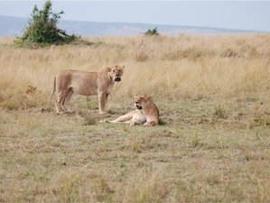 3 Days Budget Joining Camping Safari in Masai Mara National Reserve Kenya