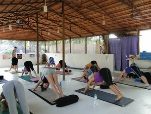 8 Days Intro to Healing and Yoga Retreat in India