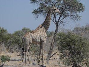11 Days Standard Safari in Botswana and Zimbabwe