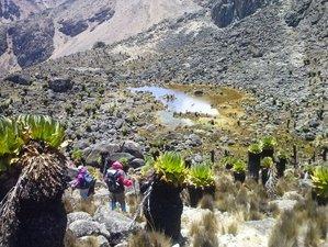 5 Days Trekking Safari Mount Kenya, Kenya