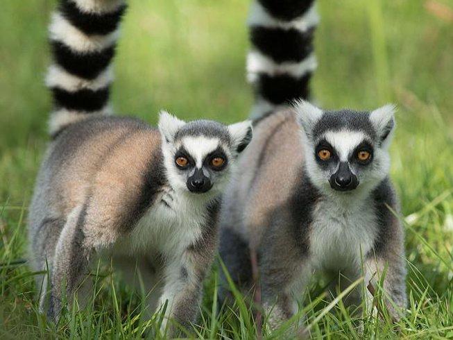 16 Days Luxury Photography Safari Madagascar