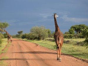 4 Days Fantastic Private Safari to Serengeti and Ngorongoro Crater from Mwanza Tanzania
