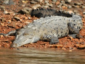 3 Day Marine and Forest Wildlife Tour in Drake Bay, Costa Rica
