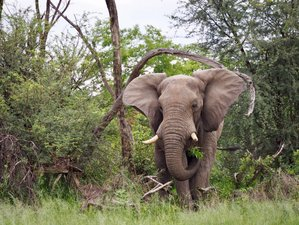 6 días de safari móvil con todas las comidas en Botsuana