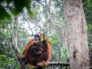 3 días de tour de vida salvaje por lo mejor de Borneo, en Sabah, Malasia