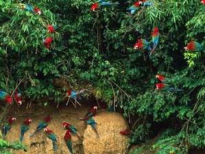 3 Day Exciting Wildlife Experience in Manu National Park, Cusco Region