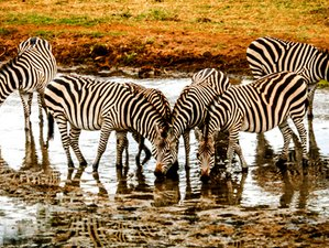 6 Days Great Migration Safari in Northern Tanzania
